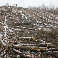 Pour éviter que les forêts ne deviennent des usines à bois